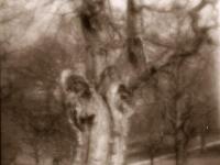 Дерево-2