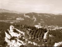 горная плантация