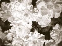 цветы крупным планом
